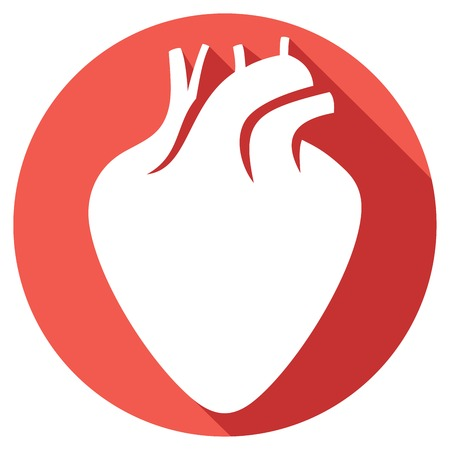 circulatory: human heart flat icon