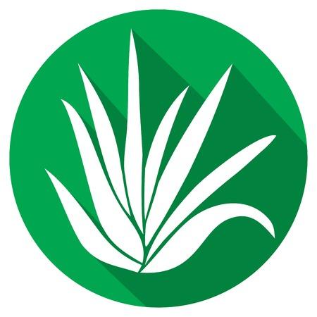 aloe vera plant: aloe vera plant flat icon