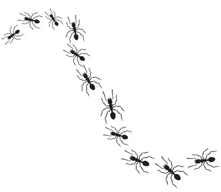 ants traveling in a row (ants marching on path)