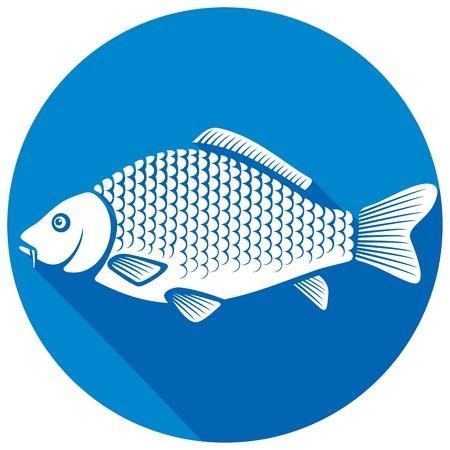 common carp: carp fish flat icon (common carp)