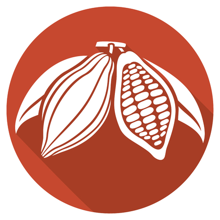 cocoa beans flat icon
