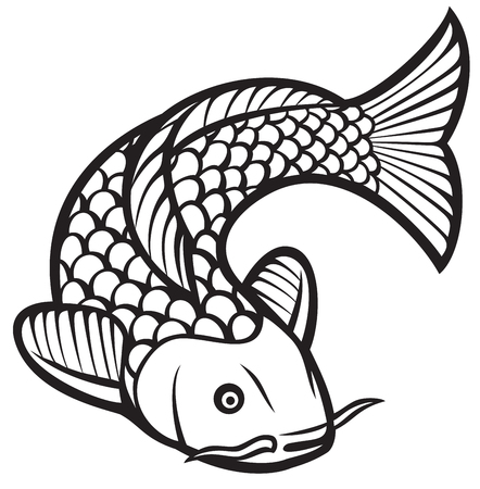 coy fish: koi fish (vector illustration of a japanese or chinese inspired koi carp fish)