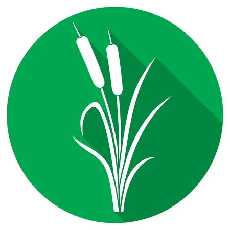 cattail: reed flat icon (bulrush)