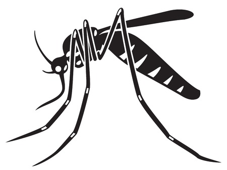 parasite: tiger mosquito vector illustration