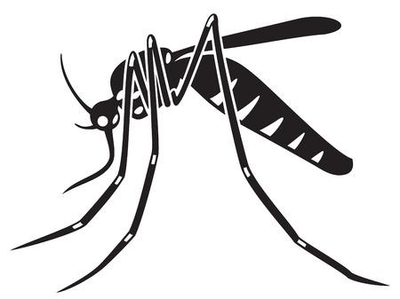 tiger mosquito vector illustration