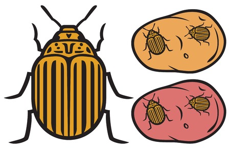 brindled: colorado potato beetle Illustration