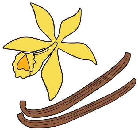 hojas secas: vainas de vainilla y flor ilustración vectorial Vectores