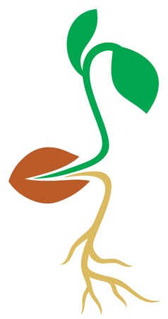 plant seed: seed vector icon (plant growing design)