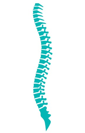 human spine vector icon Çizim