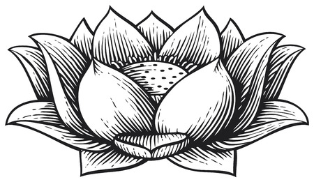 petal: lotus flower - vintage engraved vector illustration (hand drawn style)