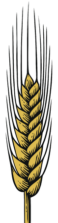 wheat ear - vintage engraved vector illustration (hand drawn style)