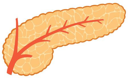 Vector illustration of pancreas