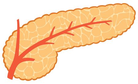 digestive: Vector illustration of pancreas