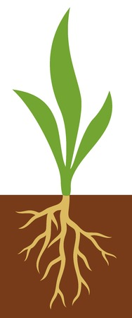 Plant with roots vector illustration
