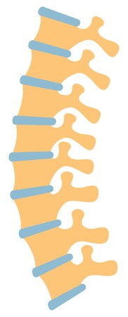 human spine vector illustration Illustration