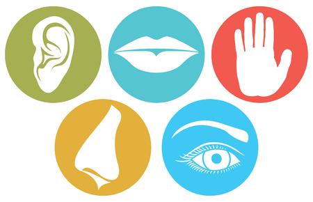 5 가지 감각 세트 : 냄새, 촉감, 청력, 맛 및 시력 (코, 입술, 눈, 귀 및 손) 벡터 일러스트 레이션 일러스트
