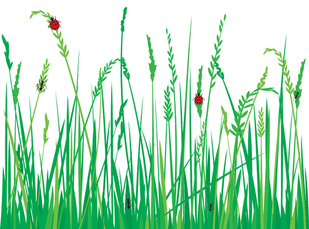 grass with ladybugs and ants vector illustration Illustration