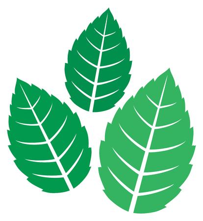 illustrazione vettoriale di foglie di menta fresca Vettoriali