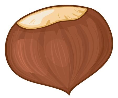 chestnut vector illustration
