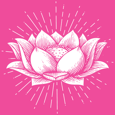 lotus flower - vintage engraved vector illustration (hand drawn style)