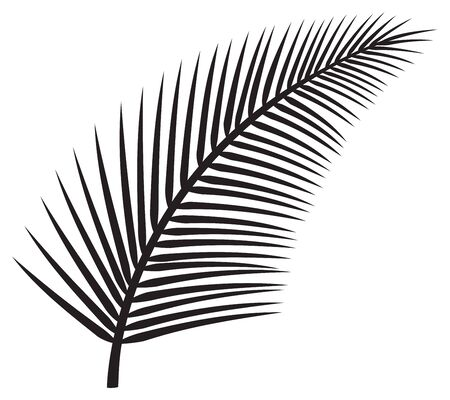 leaf of palm tree vector illustration