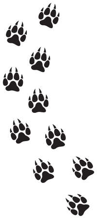 wolf paw prints track vector illustration