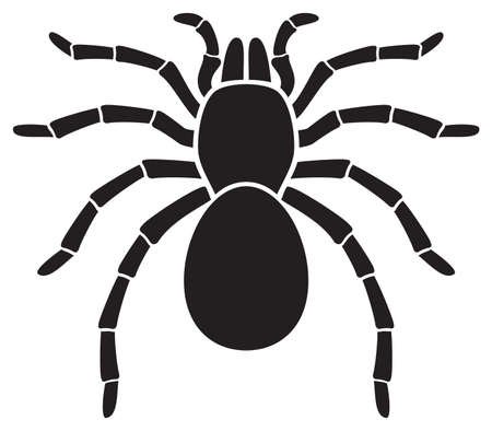 Tarantula Spider (insect) vector icon