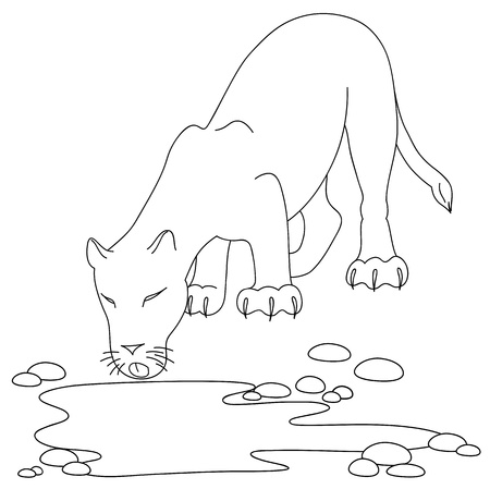 Drinking lioness by the pond Vector