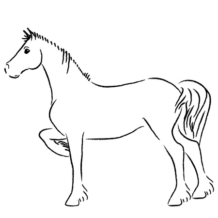 outline drawing: Wild Horse Illustration