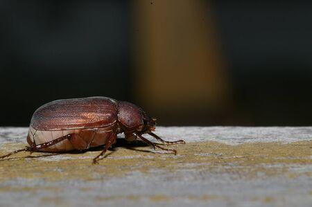 arthropoda: Beetle portrait