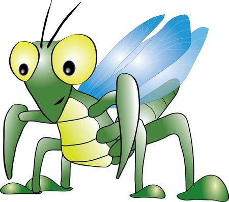 arthropod: Mantis