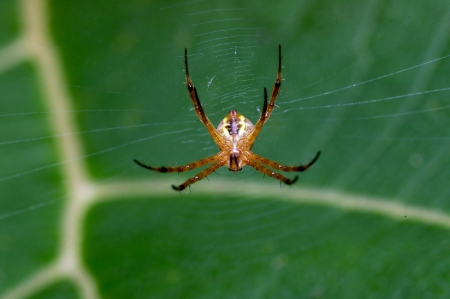 arachnida: A spider stay at its web Stock Photo