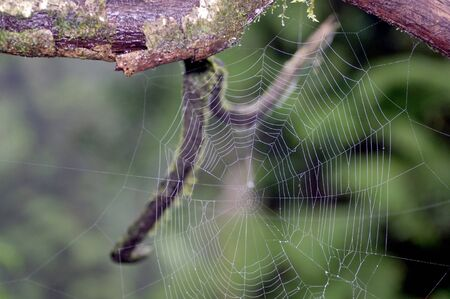 A spider web on the tree branch photo