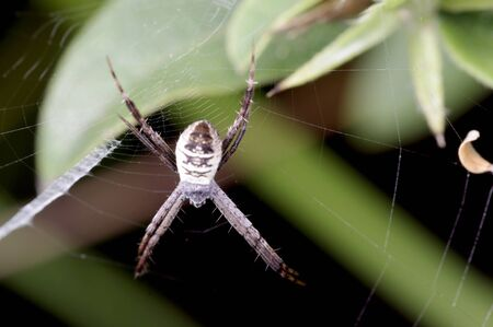 arachnida: A spider is staying on the web Stock Photo