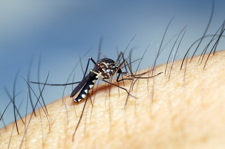 A mosquito sucking blood from human skin Stock Photo - 17973377