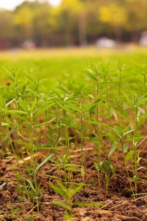 seeding: seeding of plant are growing in the field