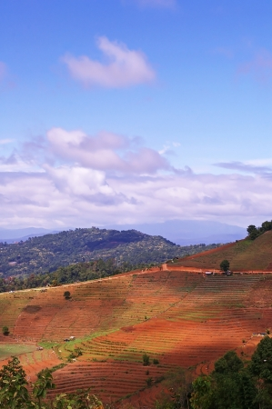 agricultural area: blue sky with cloud over the agricultural area in Chiang Mai