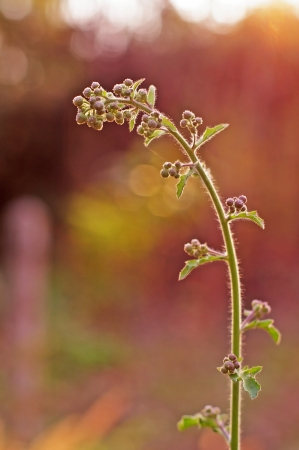 agricultural area: A shoot of weed in the agricultural area Stock Photo