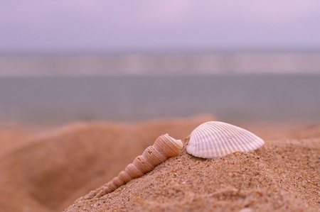 sea shells on the sand beach photo