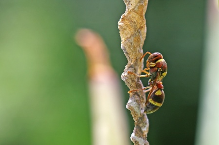 a wasp is standing on the hive photo
