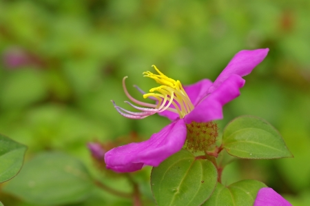 anther: violet flower with yellow anther