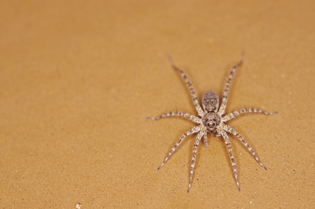 spider is standing on the sand floor