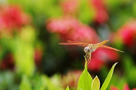 dragonfly is staying on the leaf in the flower garden