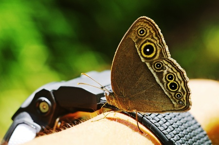 butterfly is staying on the human arm