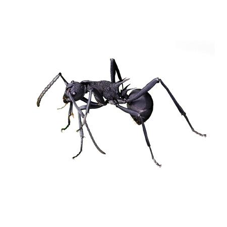 흰 배경에 고립 개미