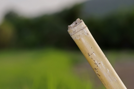 agricultural area: bamboo pole in the agricultural area