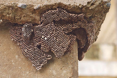 abandoned wasp hive under the cement pole photo