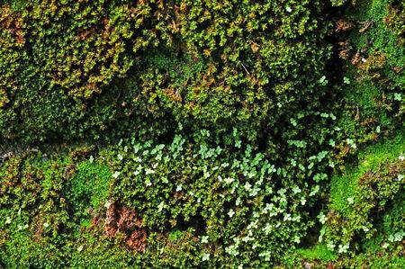 humid: moss mat on the humid stone wall Stock Photo