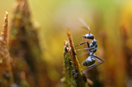 degraded: a black ant is climbing on the degraded wood