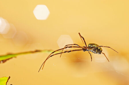 spider is walking on the web with bokeh background photo